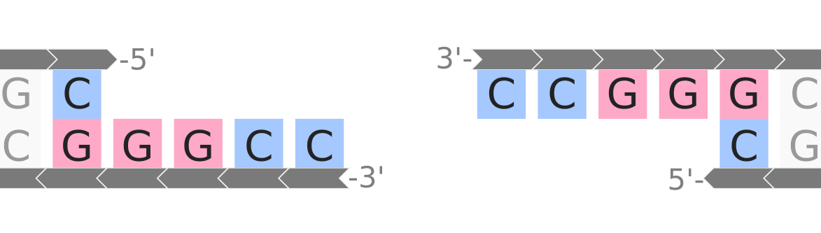 restriction mapping example